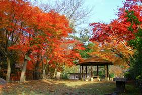 舞鶴城公園(紅葉)