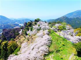 舞鶴城公園(春・桜)